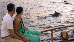 Experience a true Maldives encounter with the local wildlife
